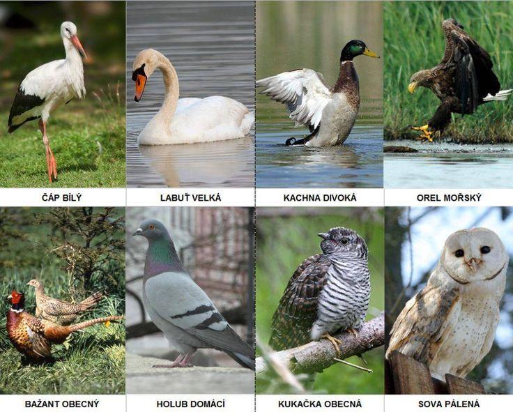 Kartičky se zvířaty z naší přírody + stručný text/zajímavost o z vířátku