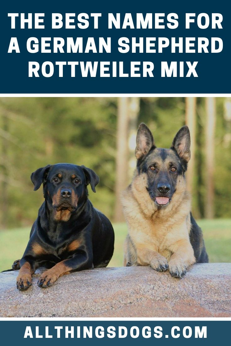 German Shepherd Rottweiler Mix Names In 2020 German Shepherd Rottweiler Mix Rottweiler Mix Rottweiler Mix Puppies