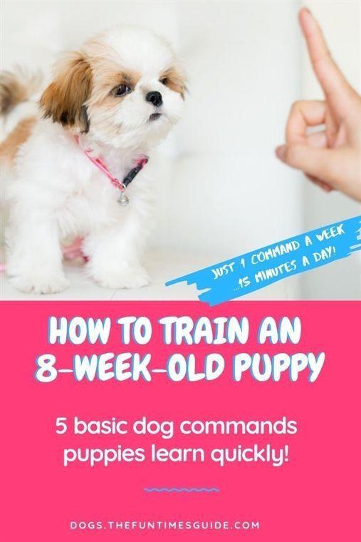 Puppy Training Book For Kids Chris Upton Puppy Training Training My 8 Week O Puppy Training Book For K In 2020 Dog Commands Puppy Training Tips Puppy Training