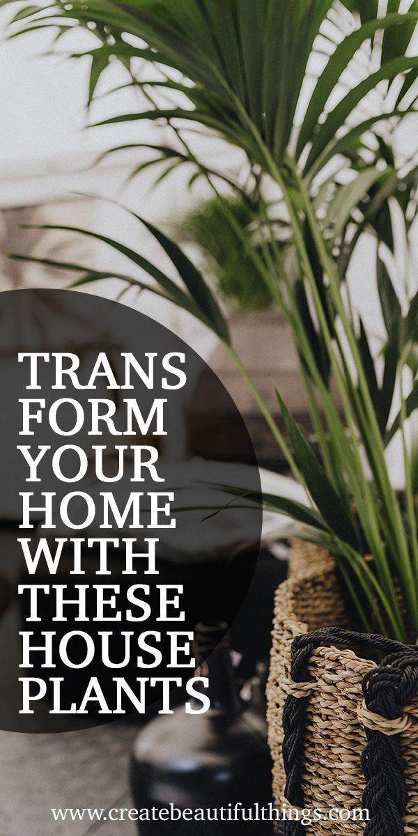 9 Zimmerpflanzen für Ihr Zuhause und Ihre Gesundheit   – My new house