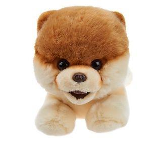 "Boo ""The World's Cutest Dog"" Life Size Plush by Gund — QVC.com"