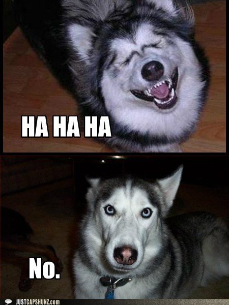 Funny Husky Jokes Meme : Husky jokes love pinterest and mom
