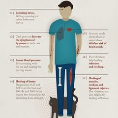 Infographic: The healing power of cat purrs
