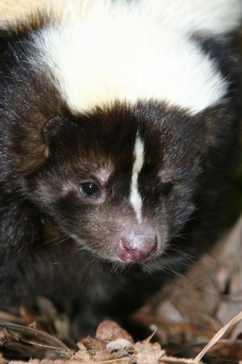 skunk <3