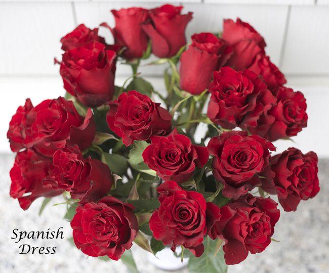 Spanish Dress Red Rose