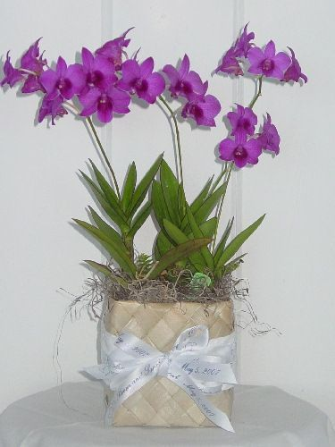1000 Ideas About Potted Orchid Centerpiece On Pinterest