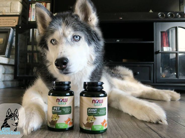 A new #Blog went up today at GonetoTheSnowDogs.com called Help Your Dog Be Calm and it's all about this product we have been using to help Oakley stay calm! Do is a favor and head over to our website and read the blog and drop us a comment on it! Thanks for your support! #nowpetssweeps #sponsor #ad @nowfoodsofficial  #calmdogs #oakley #GonetotheSnowDogs #dogs #husky #fluffybutt by gonetothesnowdogs