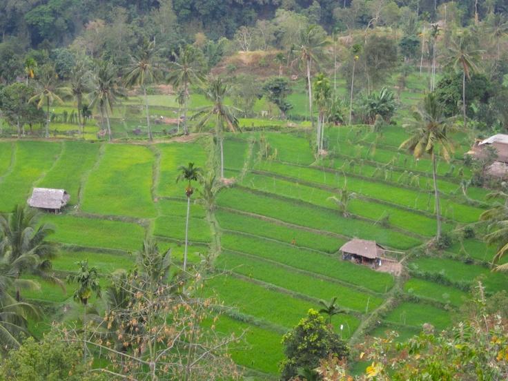 Senaru farmville Lombok Indonesia