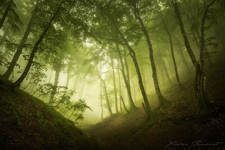 Misty Nature Photography