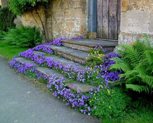 lindasinklings:    around the steps.  via (themurmuringcottage)
