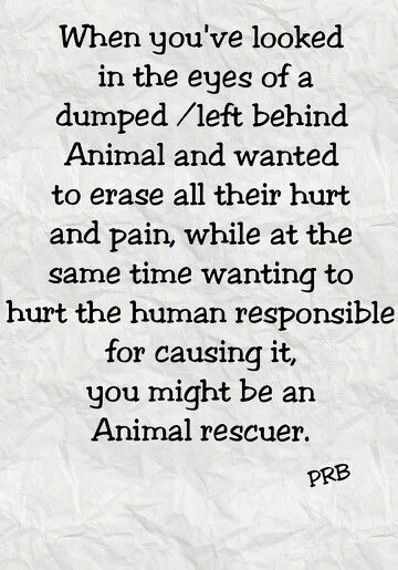 There's no question about how badly I want to HURT those that abuse animals.