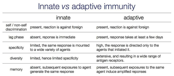 relationship between protein and immunity