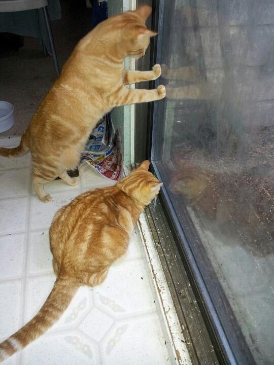 Tigger and Garfield bird warching