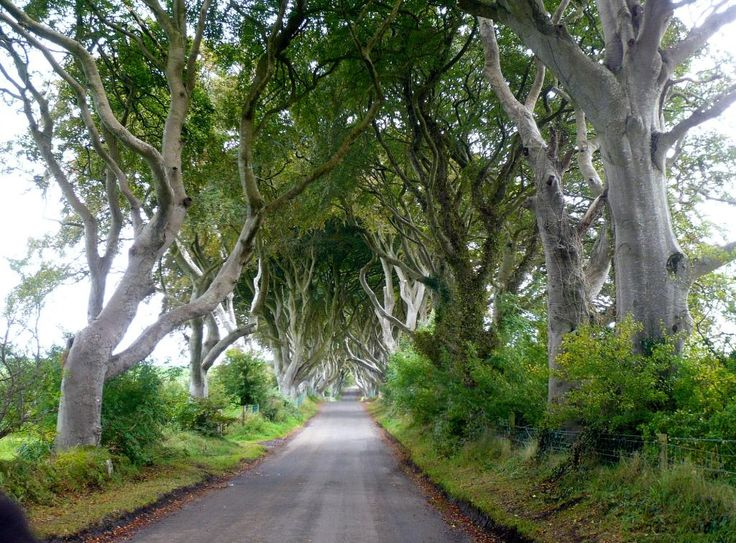 Northern Ireland UK: The Dark Hedges - County Antrim Ireland