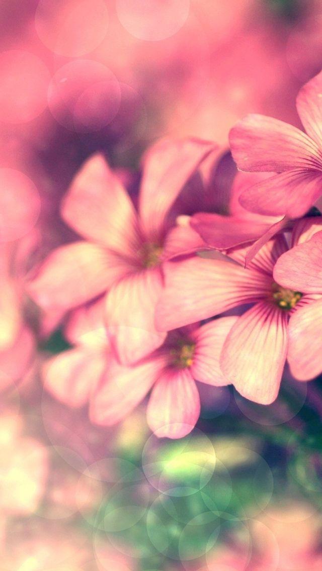 Dreamy Fantasy Pink Flower Circle Bokeh #iPhone #5s #Wallpaper