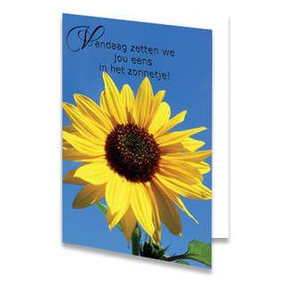 Een Moederdag kaart met een grote zonnebloem. Boven de bloem staat de tekst ''Vandaag zetten we jou eens in het zonnetje!'' De achtergrondkleur is blauw. De binnenkant van deze Moederdag kaart is helemaal wit, daar kun je zelf nog teksten en foto's of allerlei leuke afbeeldingen aan toevoegen.