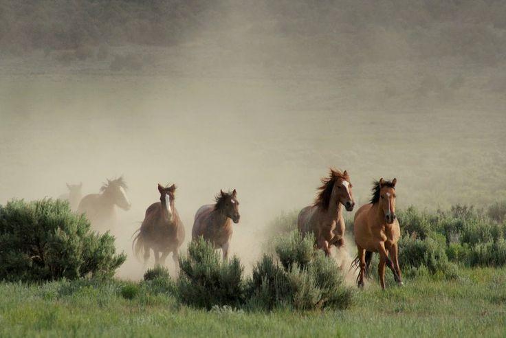 wilde paarden wallpaper - ForWallpaper.com
