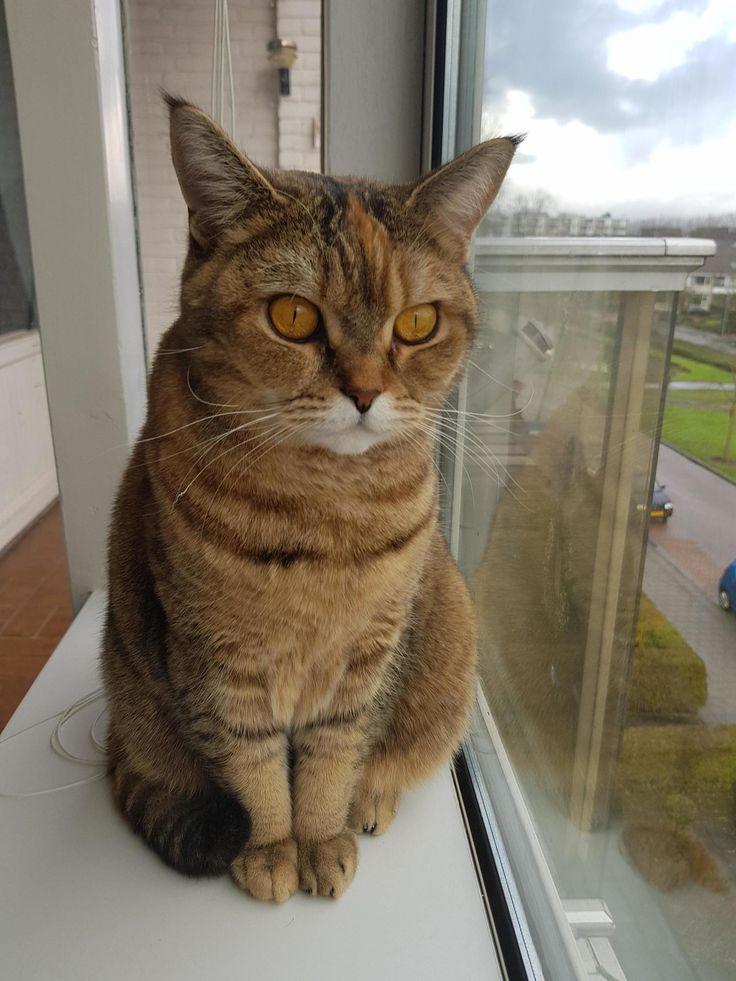 Zelda, philosophizing about birds and ready to share her wisdom - http://cutecatshq.com/cats/zelda-philosophizing-about-birds-and-ready-to-share-her-wisdom/