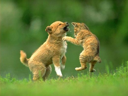Woo Hoo   Dogs & Cats   Pinterest