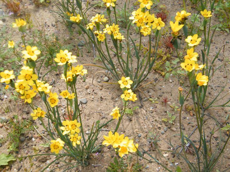 Comunidad Ecológica Los Toyos -Desierto Florido. Fotografía tomada por MAMC-TOÑA