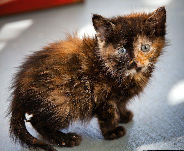 190 best Tortie Cats images on Pinterest | Cute kittens ...