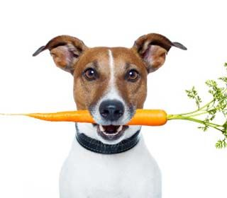 dog-food-recipes
