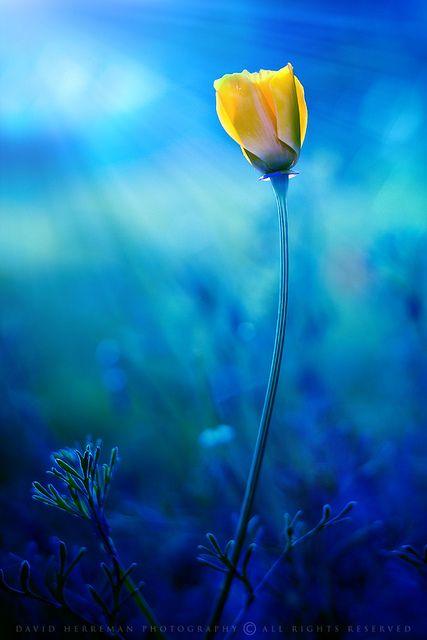 bleu jaune