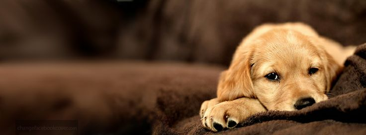 Cute Dogs And Puppies Wallpaper For Mobile Cute Animals Cover Photos For Facebook Animals Puppy