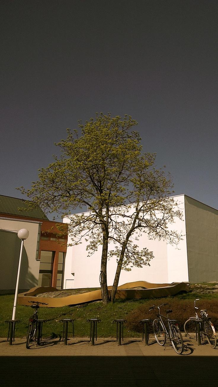 A Tree In The University of Vaasa Campus #vaasa #uwasa #university