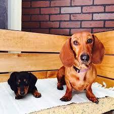 aria polinesia y kler polinesia foto de:camii