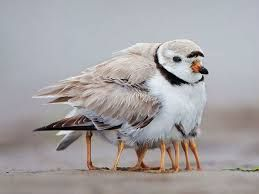 Image result for birds protect birds