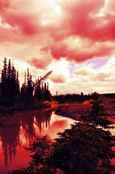 Red skies in Griffith Woods, Calgary. by Marcus Z