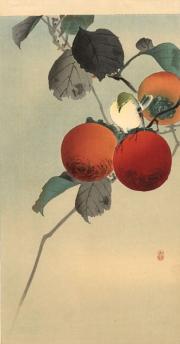 Koson Ohara (1877-1945) |  A nuthatcher upon a persimmon tree, kacho-e (In Japanese word for prints of birds and flowers), 1910. During his career he changed his name to Shoson and Hoson. So when you read Ohara Shoson or Ohara Hoson or the other way round as Shoson Ohara or Hoson Ohara, don't be confused.