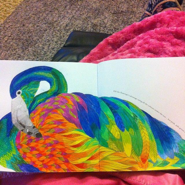 ShareIG All The Colours Animalkingdom Milliemarotta Bigkid Colouringadventure