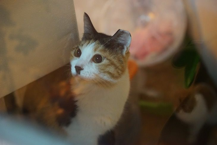 Give Back To The Cat Community And Volunteer At Animal Shelters This Thanksgiving