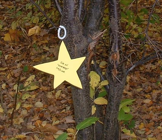 Star Nature Walk - Christmas Outdoor Activities