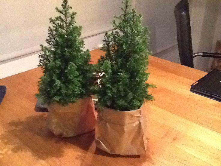 Leuk idee via Pinterest om kleine kerstbomen in zakjes te zetten