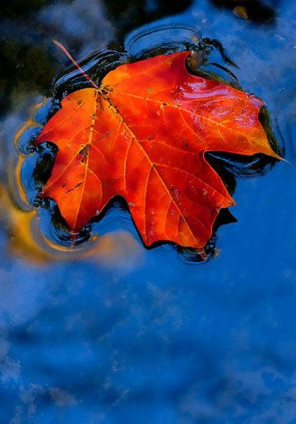 Floating leaf in water; same colors as Mondrian painting.