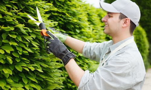 Professional Gardening: Enjoy your garden without labouring over it yourself. Experience provided by local area provider.