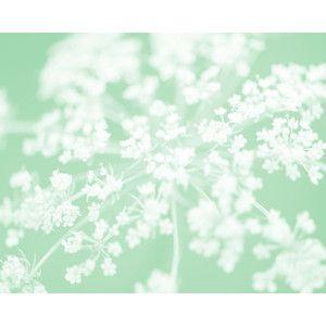 Mint Green Flower Photo 8x10 Fine Art Print minty cool refre ...