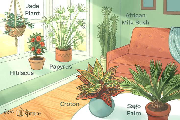 Houseplants That Love The Sun Best Plants For Home 400 x 300
