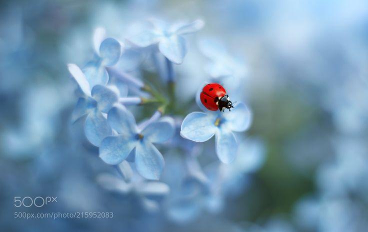 Ladybug (Elena Andreeva / Moscow) Canon EOS 100D #macro #photo #insect #nature