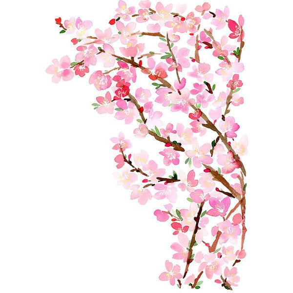 Cherry Blossoms- Watercolor Art Print (1,635 INR) ❤ liked on Polyvore featuring home, home decor, wall art, fillers, flowers, backgrounds, pink, plants, effects and doodles