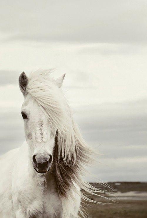 Snow white stallion...