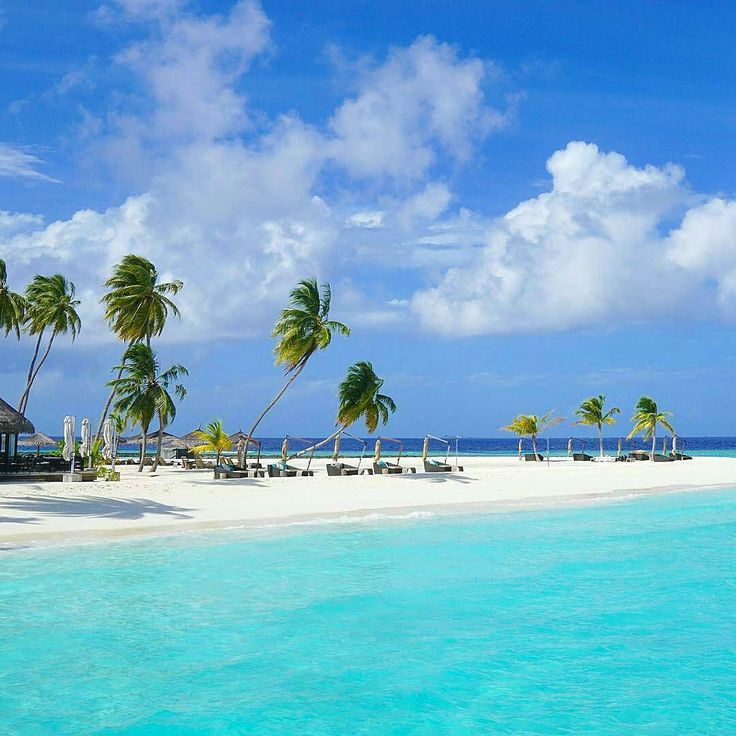 The Maldives Islands #Maldives  Photo@michutravel #paradise #getaway #weekend #palmtrees #beachday #love #bluesea #island #nature #honeymoon #keepexploring #travelnoire #travelphotography #beautiful #naturelovers #worldtravelpics #travelmore #exploretocreate #blogger #travelblogger #summertime #bliss #happy #photooftheday #view #turquoise #wonderful
