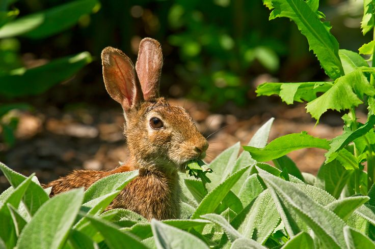how to stop rabbits chewing chords apple cider vinegar