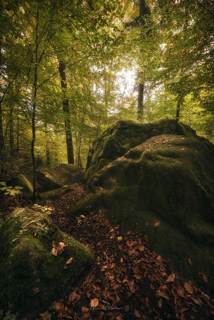 Autumn foliage by Manuel Martin- Well, a few weeks ago I walked with our dog through a forest, which I know very ...