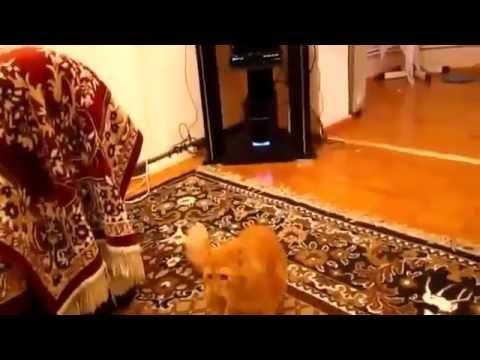 Cat vs Super Mario Sound Effects (Fact: Cats Hate Mario )