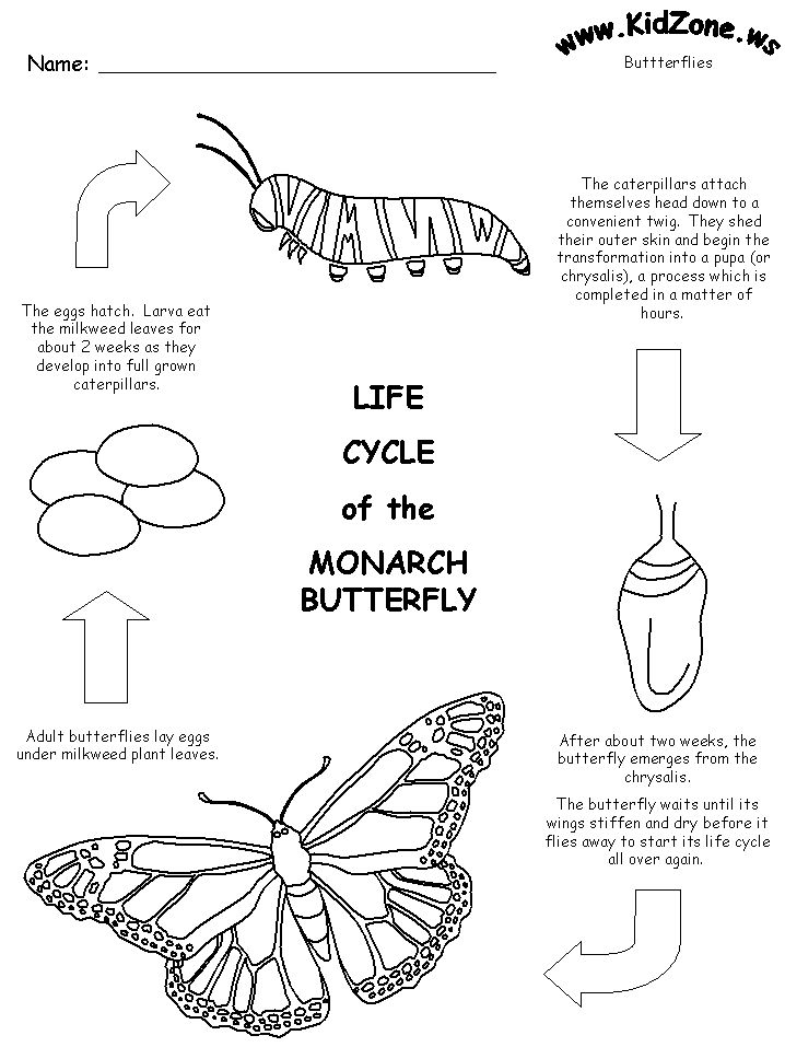 free printable life cycle of the monarch butterfly science pinterest life cycles coloring. Black Bedroom Furniture Sets. Home Design Ideas