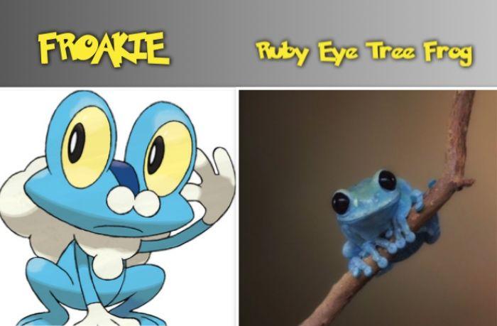 FROAKIE ruby eye tree frog